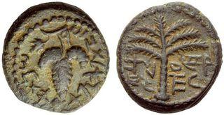 葡萄コイン